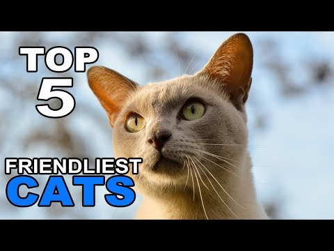 Top 5 Of The Friendliest Cat Breeds