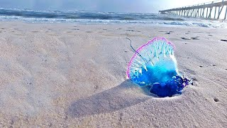 Wenn du das am Strand siehst, laufe weg und bitte um Hilfe