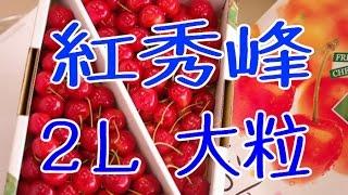 紅秀峰さくらんぼ通販。お中元果物ギフト販売。山形産は7月上旬頃が最盛期。Benisyuho Japanese cherry