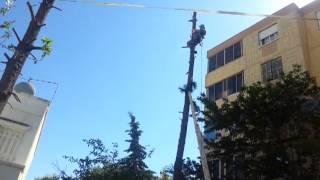 Abattage des arbres en Algérie