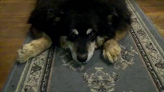 Shadow's Feeling Much Better - Thank You!