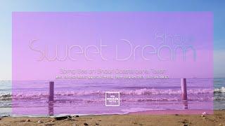 편안한 수면 | 충남 태안 신두리 해안사구 해변 ✦ 꿈…