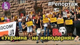 Больше сотни смертей: в Украине вышли на митинги после массового убийства собак