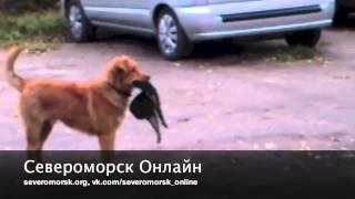 Североморск - 2012
