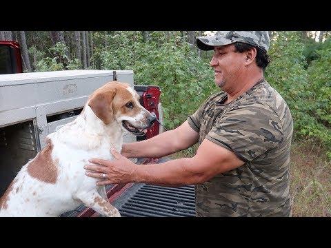 Caza De Armadillos Con Perros