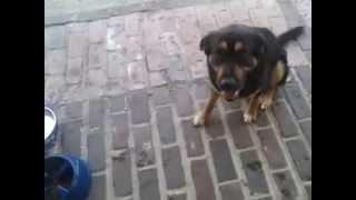 Russian Dog Commands