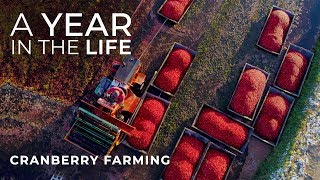 Cranberry Farming Start to Finish | Jacob Searls Cranberry Co. | Luke Parmeter Productions