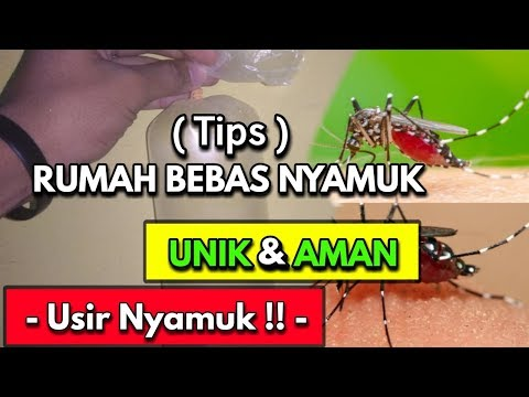 Bakar Saja!! Nyamuk Hilang Dalam Sekejap | Cara Alami Mengusir Nyamuk Di Kamar Assalamualaikum Wr.Wb.