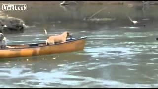 Pies ratuje dwa psy w łodzi przed utonięciem