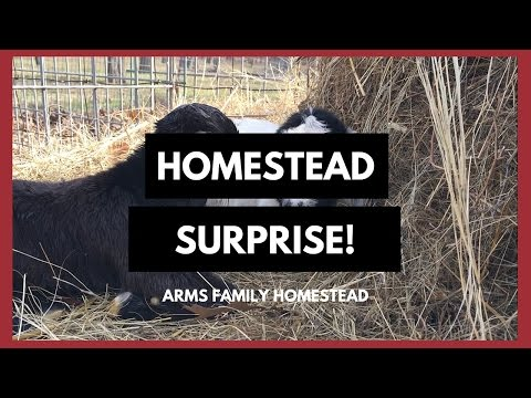 What is homesteading doovi for Is there still a homestead act