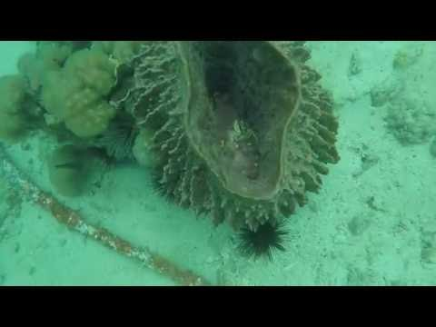 Diving in Phi phi island