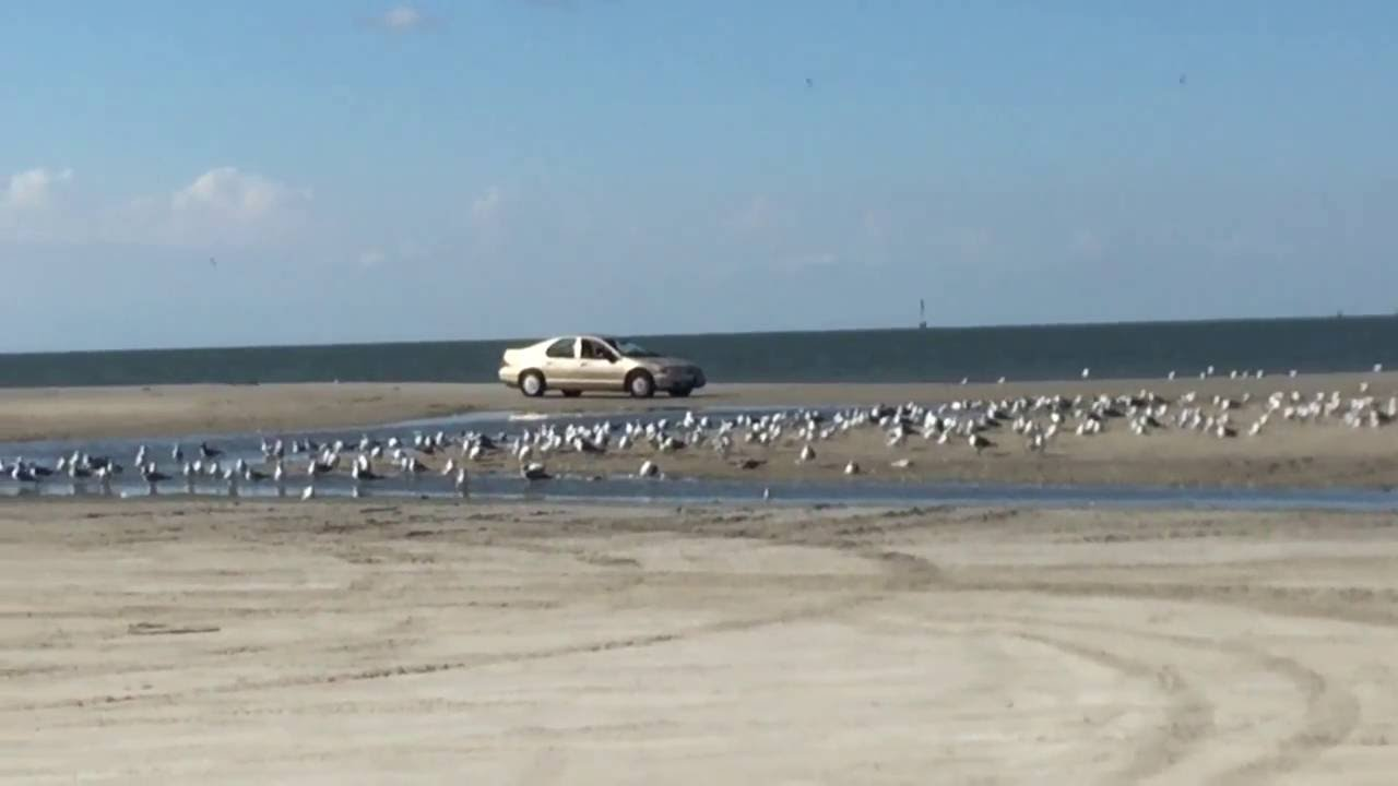 Texas city dike road colony of seagulls resting on the for Texas city dike fishing