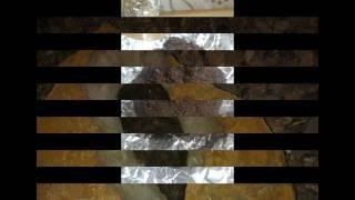 عش الخفاش او الوطواط