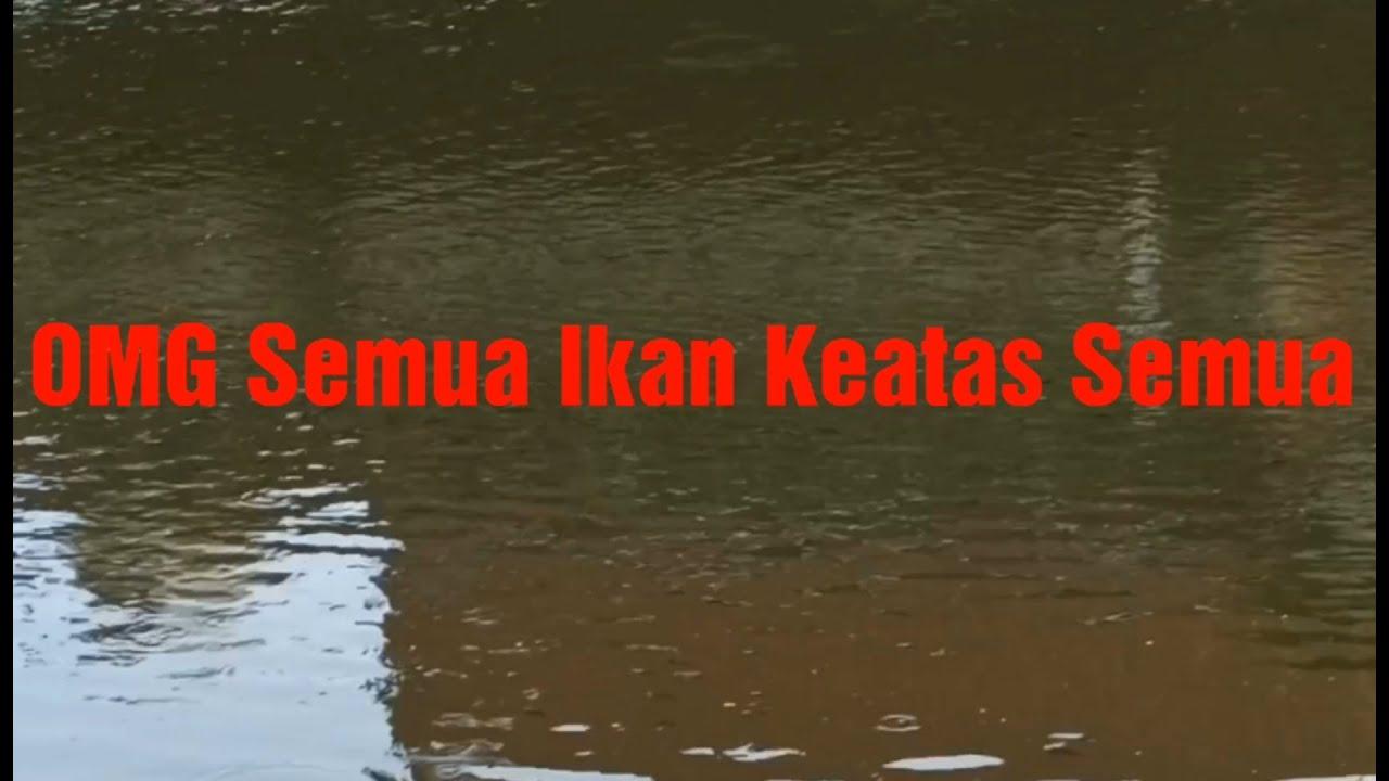 Inilah Spot Spot Nembak Ikan Di Jakarta Utara, Ikannya Babon2 #Part2