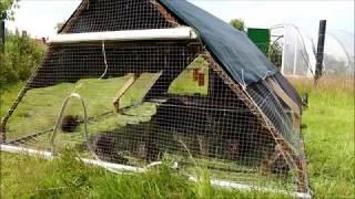 Содержание кроликов в вольере - самый удобный способ для домашнего содержания