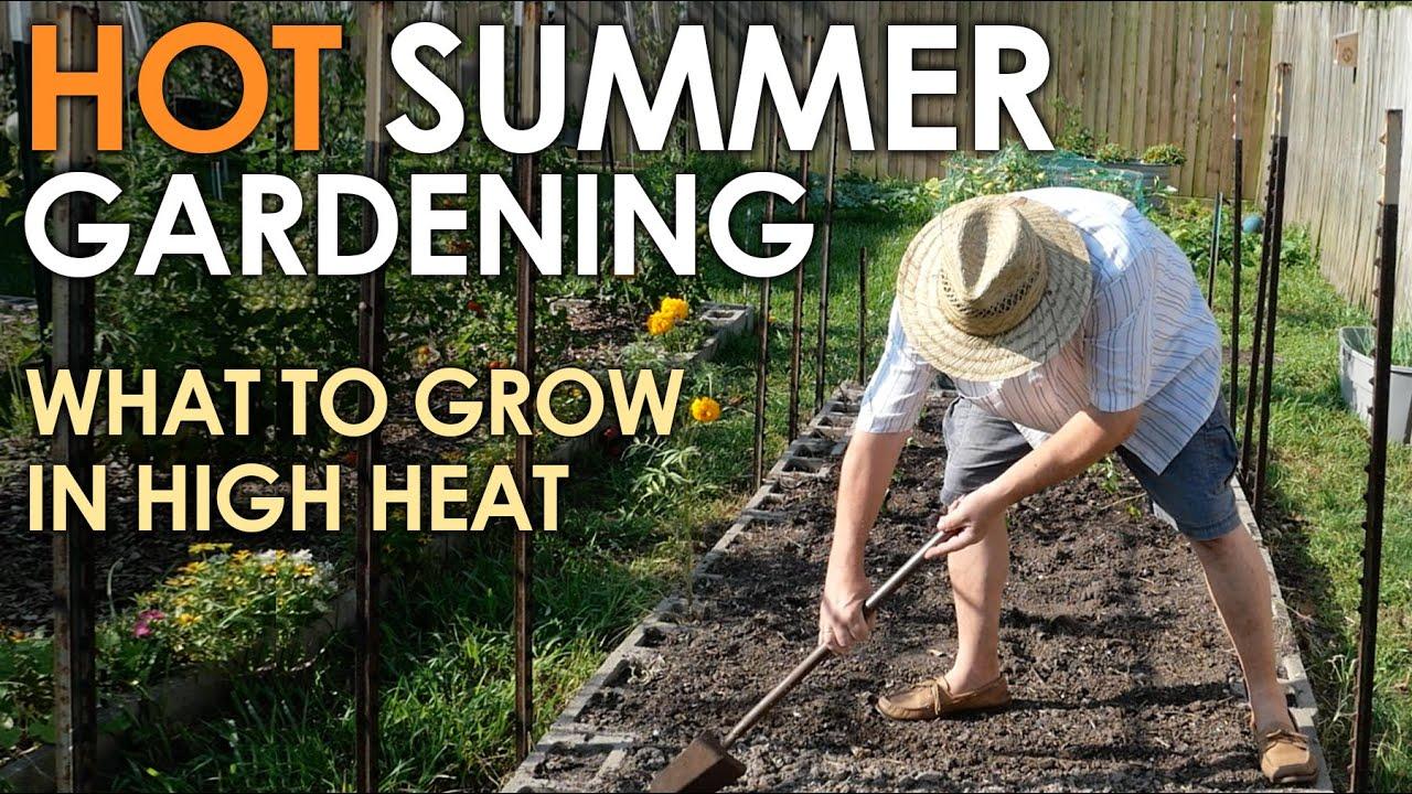 HOT SUMMER Vegetable Gardening || Black Gumbo