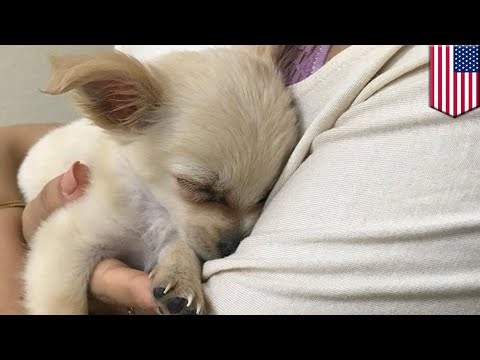 Abandoned puppy found in airport with note from owner escaping abusive relationship - TomoNews