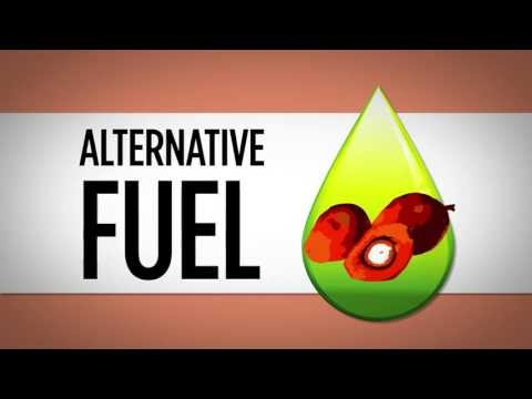 Palm Oil - Biofuel