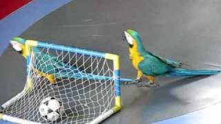 Parrot show in China.mp4
