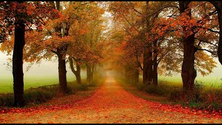♡ André Rieu - Les Feuilles Mortes (Autumn Leaves)