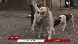 Собаки ищут дом: история любви лабрадора и дворняги