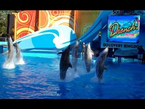 Drench! - Dolphin Show (5/26/13)