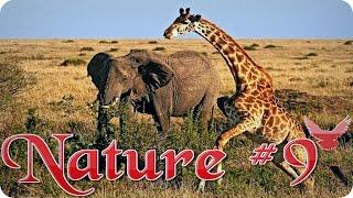 Nature #9  Дикая природа  Животные  Природа  Красивое видео  Animal videos