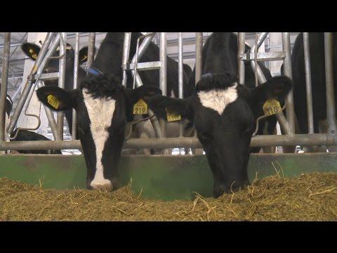 «Агрономика». Селекция и генетика КРС (17.05.2017)