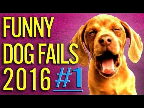[Funny Fail]  Humorous Canine Fails 2016 PART #1 ★ Canine / Pets Fails Compilation ★ Cute puppies being funn