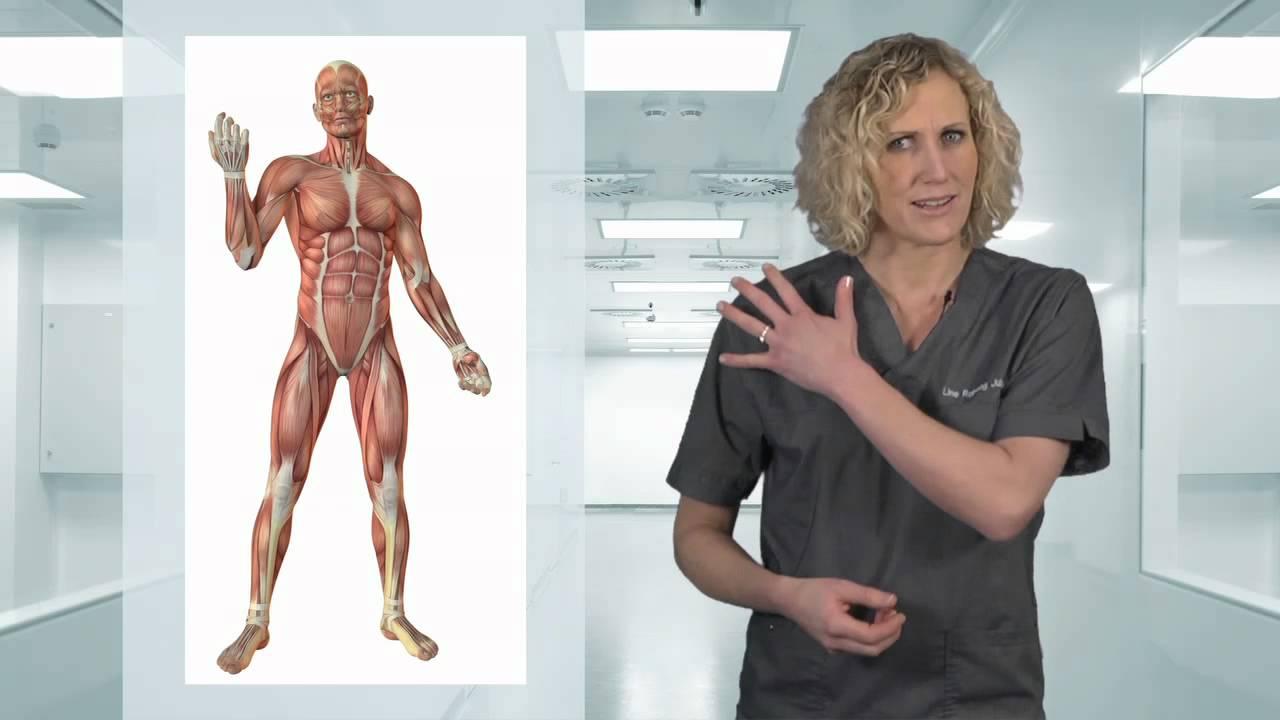 Osteopat - Kropp og Helseklinikken - Gjøvik