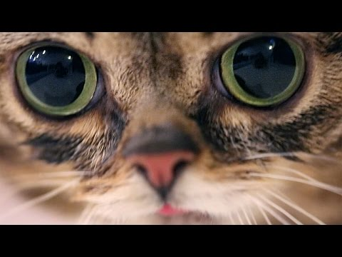 A Moment with BUB.
