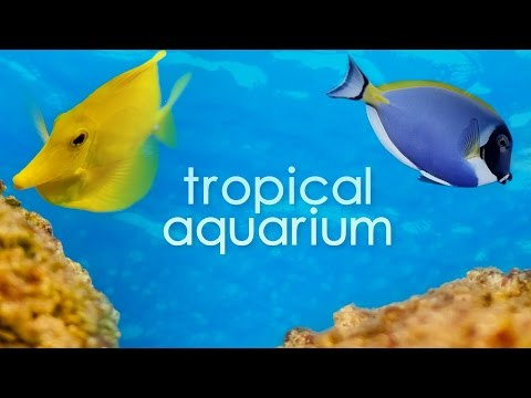 Vancouver Tropical Aquarium in 4K