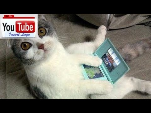 FUNNY CATS compilation HD (must see funny cat videos ) kittens & cat pictures