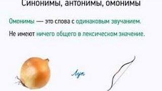 лексическое значение  антонимы синонимы омонимы