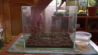 Запуск нано аквариума 15л