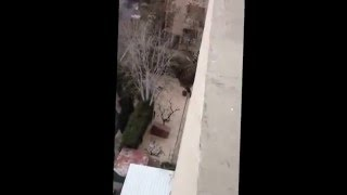 Падение кота с 11 этажа