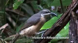 Birding North-East Queensland: 89 Australian Birds