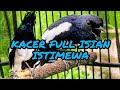 Masteran Dan Terapi Cepat Kacer Jadi Fighter Gacor(.mp3 .mp4) Mp3 - Mp4 Download