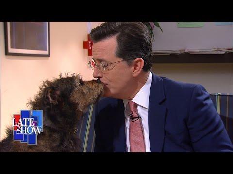 Colbert Rescue Dog Rescue