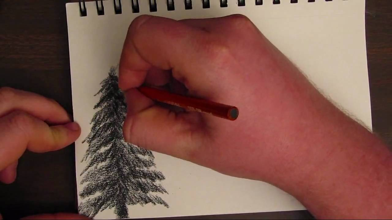 how to draw a basic tree youtube