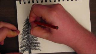 How to Draw a Basic Tree