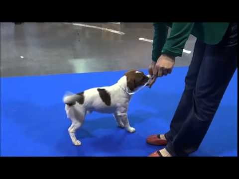 Prague Expo Dog 2.5. 2015 JRT