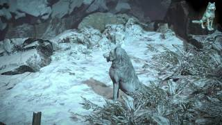 Path of Exile: White Wolf Pet