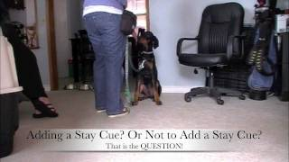 Stay - Duration With Drake: Clicker Dog Training