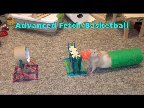 Advanced Rat Fetch/Basketball