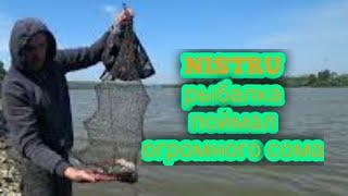 открыл сезон рыбалки словил сома первый раз