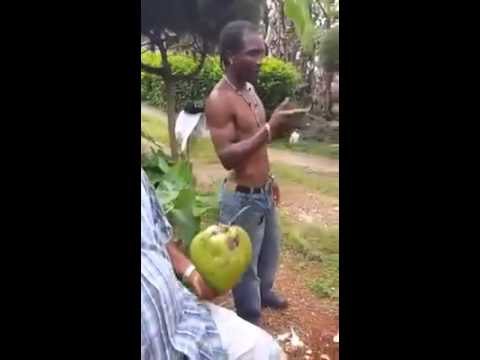 Jamaican man peel & cut coconut with his teeth.