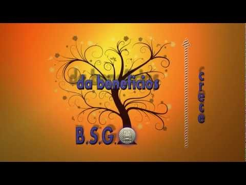 BSG Business Solutions Group