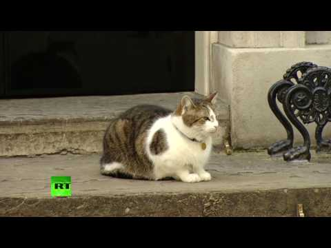 Larry the Cat, only 10 Downing Street resident certain of returning home following #GE2017