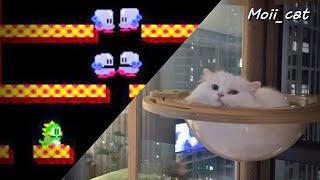 고양이 보글보글 | 책장원정대 (세로영상)
